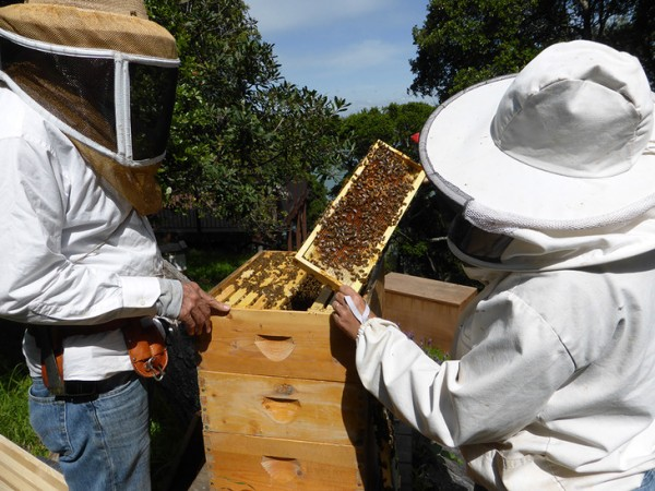 PSU researchers among group that discovered that bees do better on a natural diet, too