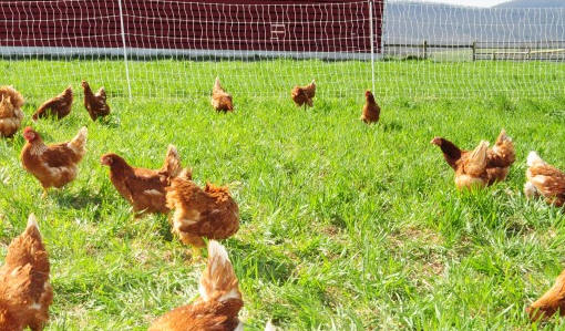 Five very good reasons to buy pastured eggs at farmers markets