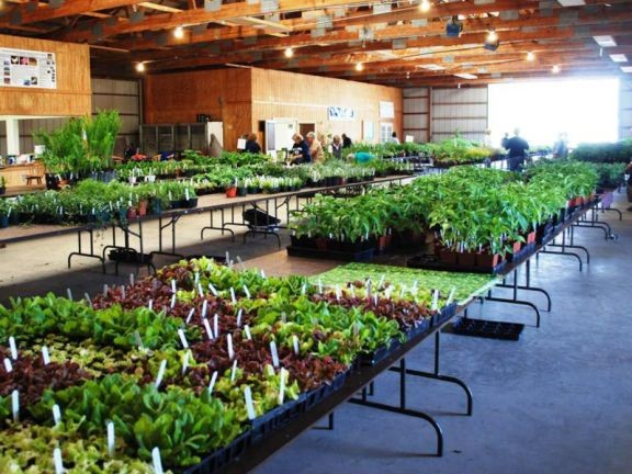 Local plant sales offer variety of food and ornamental plants