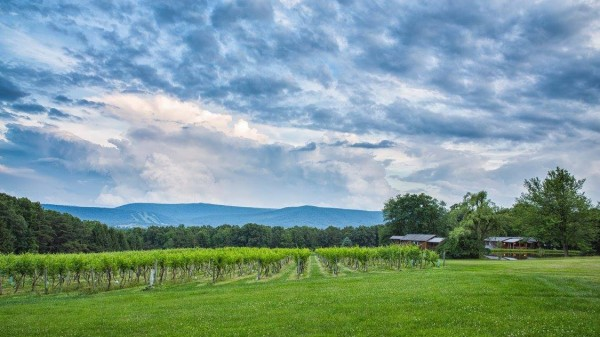 Unique wine events on spring calendar at Mt. Nittany Vineyard & Winery