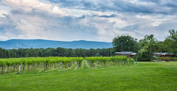 Mother's Day, June events highlight Mt. Nittany Winery calendar