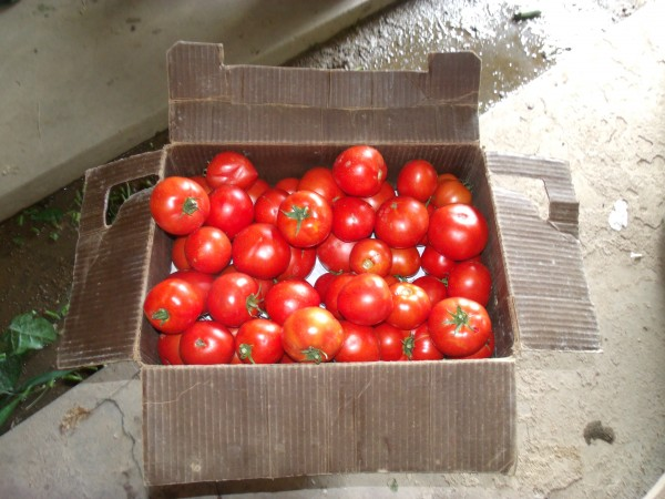 Head out to the Tomato Festival today (Friday Aug. 1) at Downtown State College Farmers Market