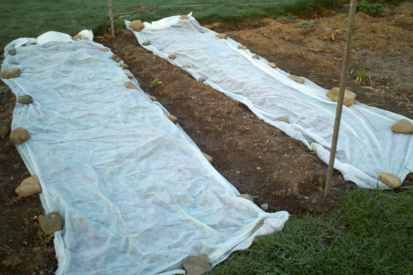 Planting Cold-Hardy Veggies for Spring Crops