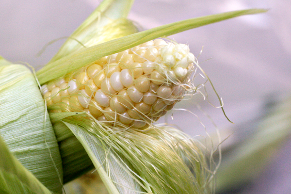 Winner of the Sweet Corn Recipe Contest
