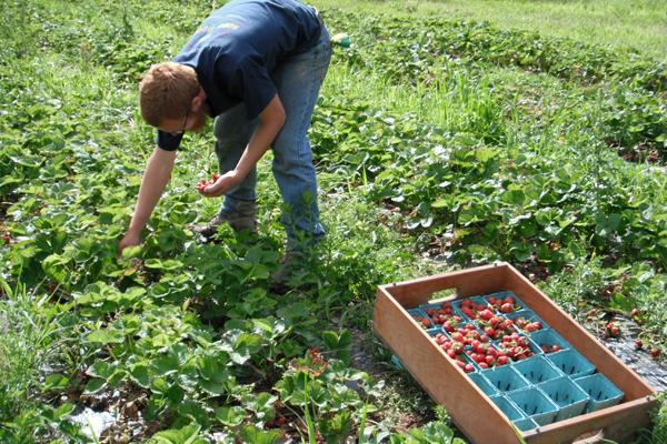 Field Notes: Mid-June Radishes and Berries