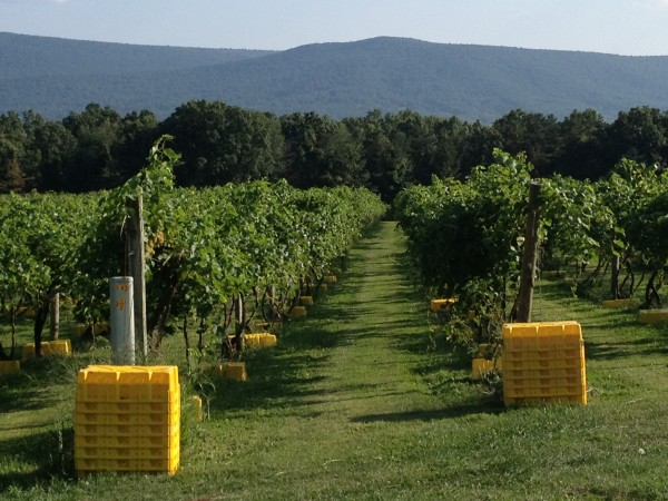 Mt. Nittany Vineyard & Winery hosts Winemakers Harvest Dinner Oct. 5