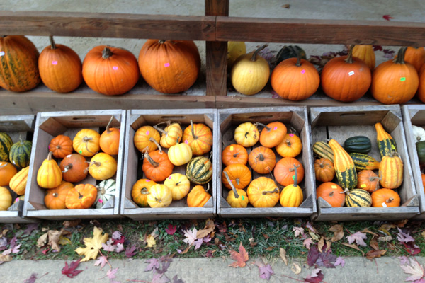 The State of Local Food at the Harvest Fest