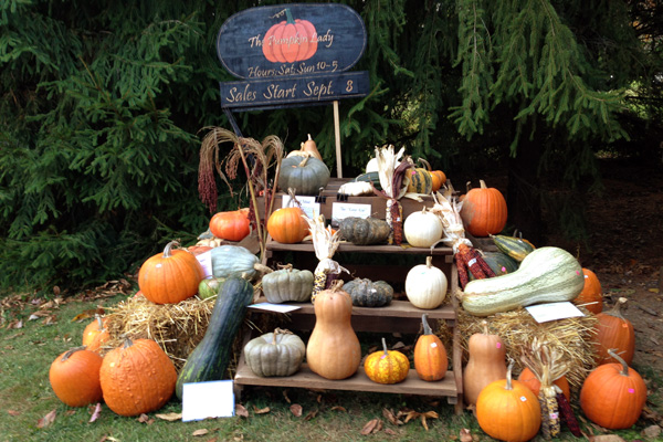 Six things that are great about local food and fall