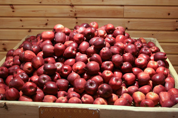 Apples at Way Fruit Farm