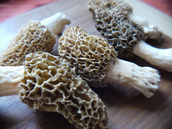 Morel madness!