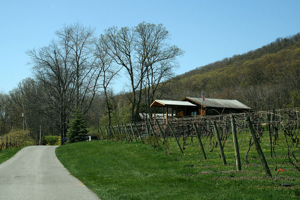 Harvest Photo Contest for Mount Nittany Winery