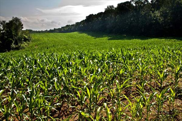 Why Organic? Part 5: GMOs