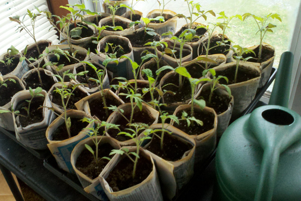 Paper Pots Offer Cost-Effective, Environmentally Friendly Home for Seedlings