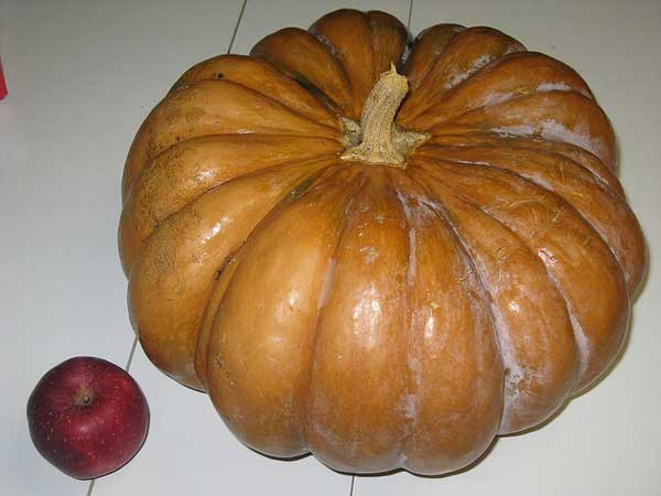Pumpkins - not just for pies and front stoops anymore