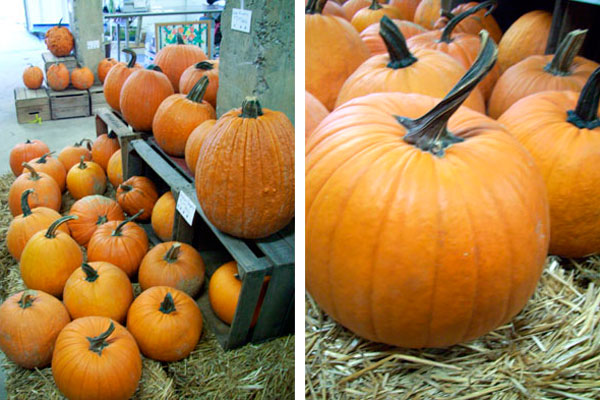 Pumpkins: More than just pies and jack-o-lanterns