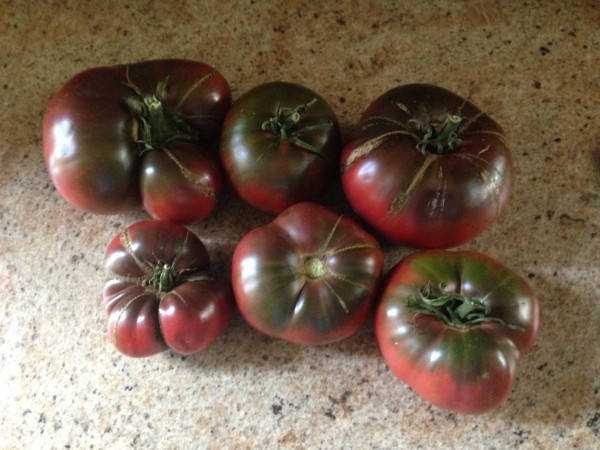 So you grow the best tomatoes ever, eh? Here's your chance to prove it